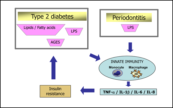 relationship between inflammation insulin resistance and type 2 diabetes